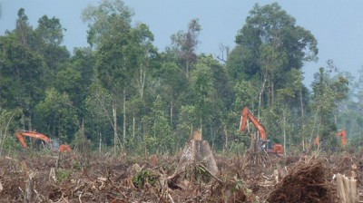 "Three excavators were caught red handed in this photo, felling trees of natural forest in PT. Riau Indo Agropalma (RIA) concession. Photo taken by Eyes on the Forest at 0°4'38.93""N, 102°57'4.18""E on 8 April 2013."