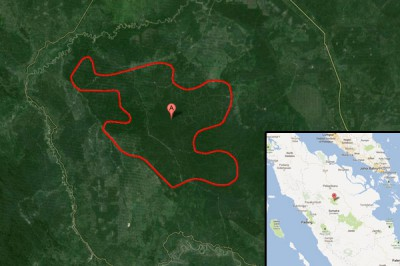 Tesso Nilo protected area in Sumatra. Map courtesy of Google Earth.