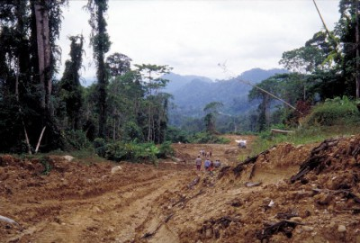 A view of forest cleared in Borneo
