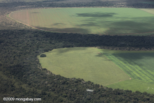 Large-scale soy fields in the southern Brazilian Amazon. Photo by Rhett A. Butler / mongabay.com