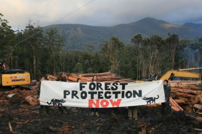Progress and clear vindication after a determined campaign, but Ta Ann is still felling forest in Tasmania.